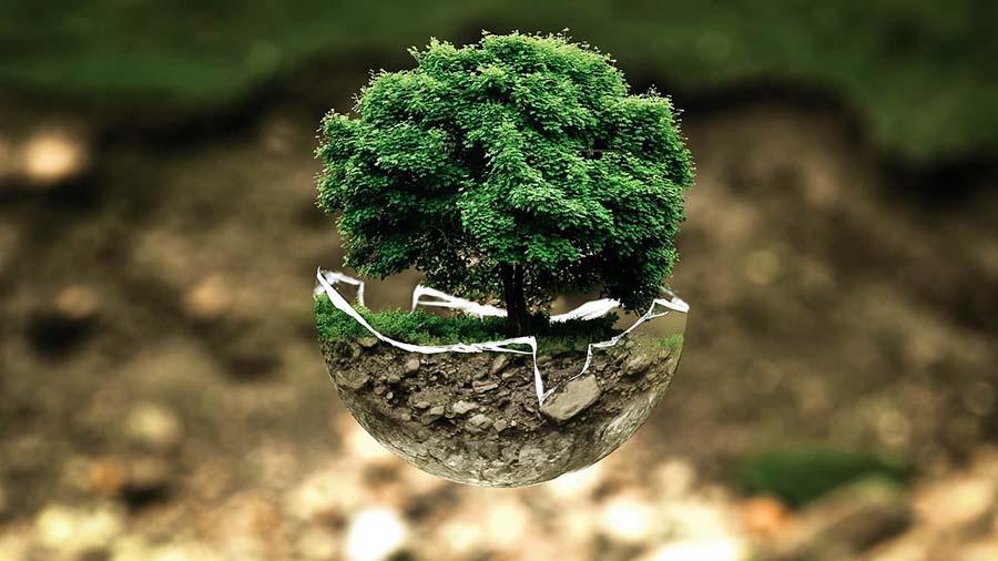 proteccion de medio ambiente